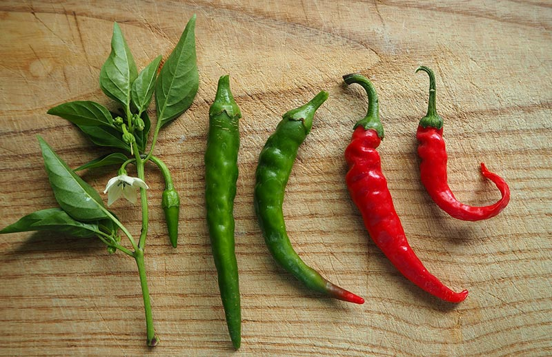Understanding Hot Chilli Peppers - The Ultimate Guide to the Hardiest of Culinary Foes
